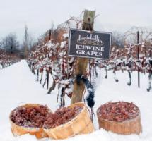 Icewine Festival - January 2015!