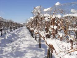 Niagara on the Lake Icewine Festival